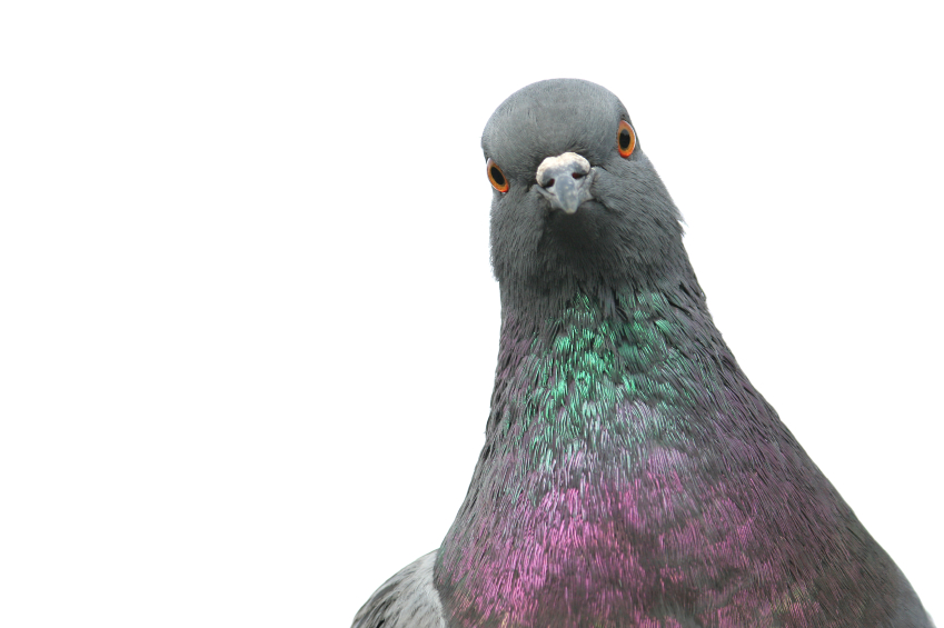 "Experts Weigh In On Google's ""Pigeon"" Update Aimed At Improving Local Search Results"